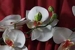 Flower_Under