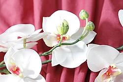 Flower_over